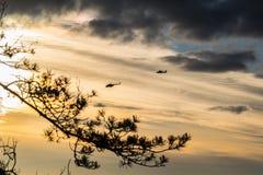 Twee helikopters die in avondhemel vliegen Stock Fotografie