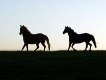 Twee Hengsten Royalty-vrije Stock Afbeelding
