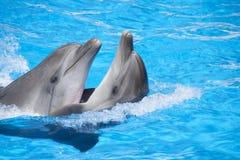 Twee het dansen dolfijnen Stock Fotografie