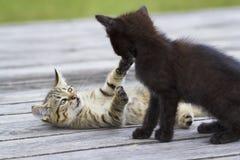 Twee het kleine katjes spelen Royalty-vrije Stock Fotografie