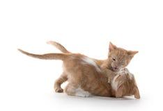 Twee het leuke katjes spelen Royalty-vrije Stock Foto's