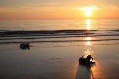 Twee het werk type de Engelse jachthonden van het aanzetsteenspaniel op een strand Royalty-vrije Stock Foto's