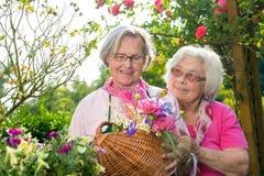 Twee hogere vrouwen die zich met mand in tuin bevinden Royalty-vrije Stock Foto