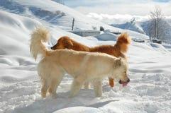 Twee honden stock afbeelding
