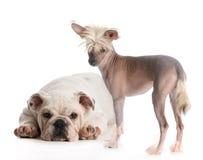 Twee Honden Royalty-vrije Stock Foto