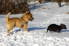 Twee honden in de sneeuw Stock Afbeelding