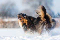Twee honden in de sneeuw Royalty-vrije Stock Afbeelding