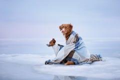 Twee honden die op het ijs zitten Stock Afbeelding