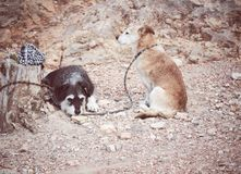 twee honden die op hun die eigenaars wachten aan een oude boomstam worden gebonden royalty-vrije stock afbeeldingen