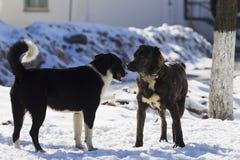 Twee Honden die in sneeuw spelen Stock Fotografie