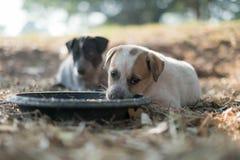 Twee honden eten voedsel en spelen met speelse gebaren stock foto