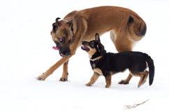 Twee honden grote klein Royalty-vrije Stock Afbeeldingen