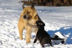 Twee honden het spelen Royalty-vrije Stock Fotografie