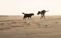Twee honden het spelen Stock Afbeelding