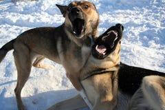 Twee honden het zingen stock afbeelding