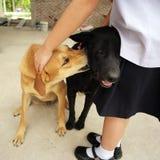 Twee honden neemt zorg door de tikken en de vlo van elkaar schoon te maken en boting royalty-vrije stock foto
