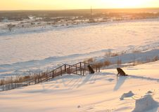 Twee honden op bank van de winterrivier Royalty-vrije Stock Afbeelding