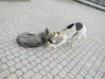Twee honden op een asfalt Royalty-vrije Stock Afbeelding