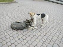 Twee honden op een asfalt Royalty-vrije Stock Afbeeldingen