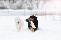 Twee honden op een de wintergang Royalty-vrije Stock Afbeelding