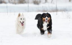 Twee honden op een de wintergang Royalty-vrije Stock Afbeeldingen