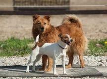 Twee honden in openlucht Royalty-vrije Stock Foto