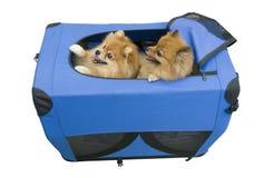 Twee honden in reisgeval Royalty-vrije Stock Foto's