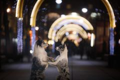 Twee honden samen in de stad in avond Liefde en vriendschap stock foto
