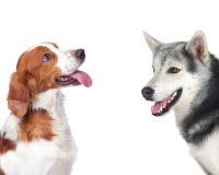 Twee honden van verschillende rassen stock foto