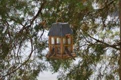 Twee Huis Finches Royalty-vrije Stock Afbeelding