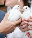 Twee huwelijksduiven royalty-vrije stock afbeeldingen