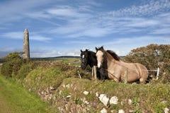 Twee Ierse paarden en oude ronde toren Stock Afbeeldingen