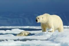 Twee ijsbeer, in het water, tweede op het ijs Ijsbeerpaar geknuffel op afwijkingsijs in Noordpoolsvalbard Het wildactie s stock afbeelding