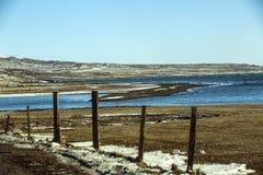 Twee Ijslandse paarden in wintertijd royalty-vrije stock fotografie