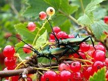 Twee insecten Royalty-vrije Stock Fotografie