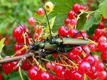 Twee insecten Royalty-vrije Stock Foto's