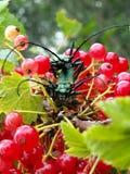 Twee insecten Royalty-vrije Stock Afbeeldingen