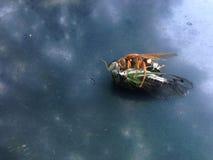 Twee insecten stock foto's