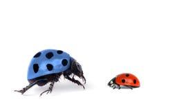 Twee insecten op wit Royalty-vrije Stock Foto