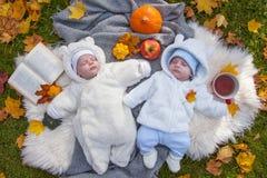 Twee jonge geitjes royalty-vrije stock foto