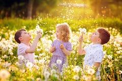 Twee jonge geitjesjongens en weinig babymeisje die op een paardebloem blazen bloeien op de aard in de zomer Gelukkige gezonde peu stock afbeeldingen