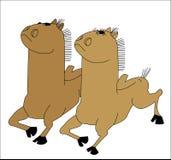 Twee jonge het lopen paarden Stock Afbeeldingen