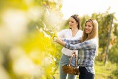 Twee jonge vrouwen in wijngaard royalty-vrije stock afbeeldingen