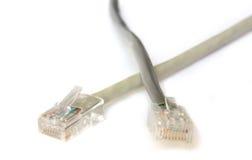 Twee Kabels van het Netwerk van de computer Stock Foto