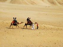 Twee kamelen in de woestijn Royalty-vrije Stock Afbeeldingen