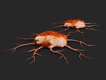 Twee kankercellen, geïsoleerde donkere achtergrond, 3d Illustratie Stock Foto's