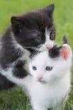Twee Katjes Royalty-vrije Stock Foto
