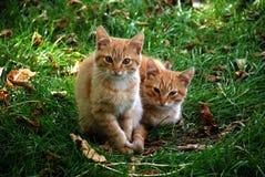 Twee katjes binnen in het gras Stock Afbeeldingen