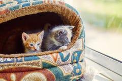 Twee katjes die uit het venster kijken Stock Foto