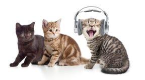 Twee katjes en weinig kat die aan muziek binnen luisteren Stock Afbeeldingen